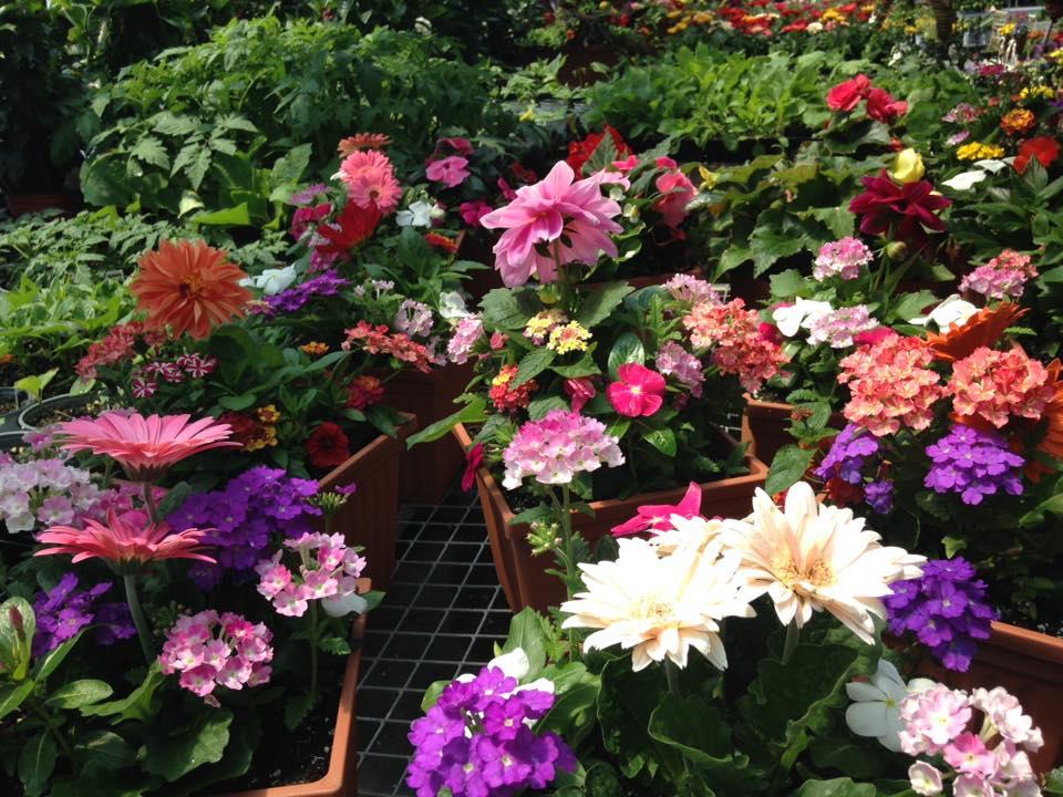 Joseph Garden Center Bohemia Ny - Garden Ftempo
